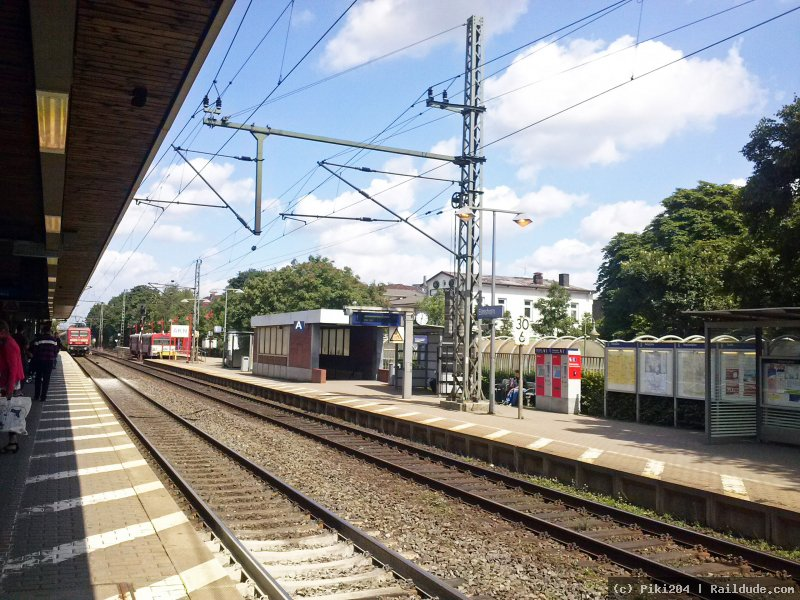 Single elmshorn