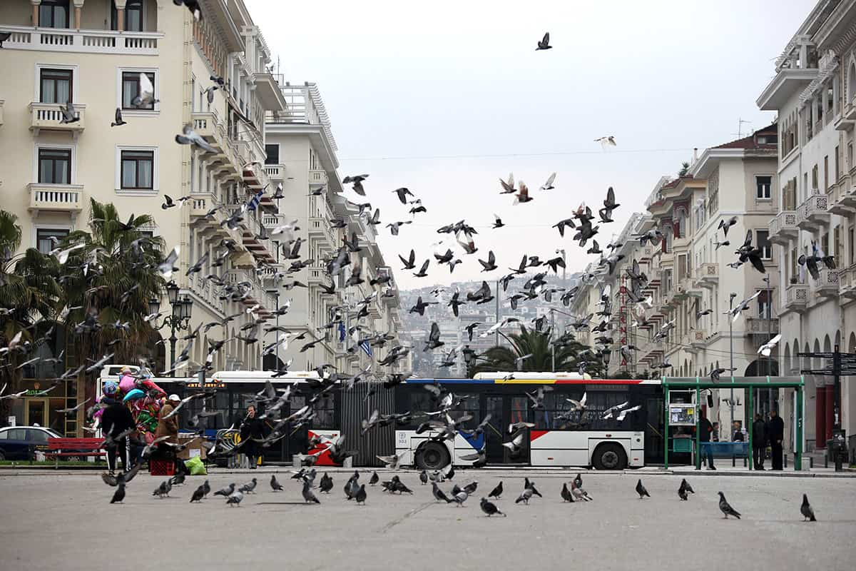 Flying pigeons on the square in front of the